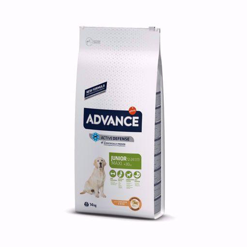 Imagem de ADVANCE Dog | Maxi Junior Chicken & Rice 14 kg