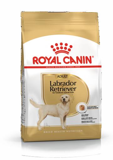 Imagem de ROYAL CANIN | Dog Labrador Retriever Adult