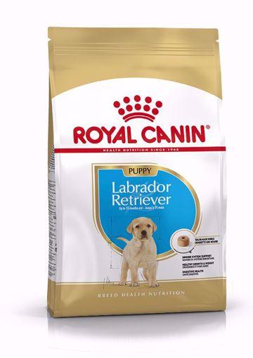 Imagem de ROYAL CANIN | Dog Labrador Retriever Puppy
