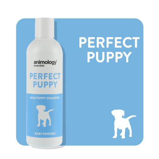 Imagem de ANIMOLOGY Dog | Shampoo Perfect Puppy 250 ml