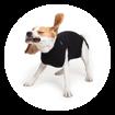 Imagem de SUITICAL Dog   Recovery Suit® - Fato de Recuperação pós Cirurgico   Black
