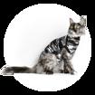 Imagem de SUITICAL Cat | Recovery Suit® - Fato de Recuperação pós Cirurgico